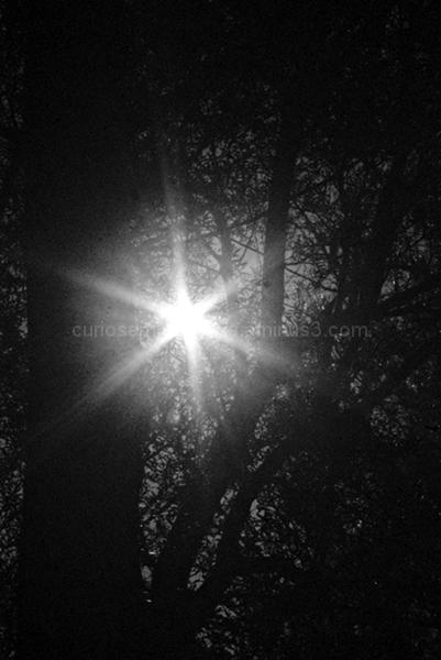 Y siempre ando mirando la luz entre las ramas...
