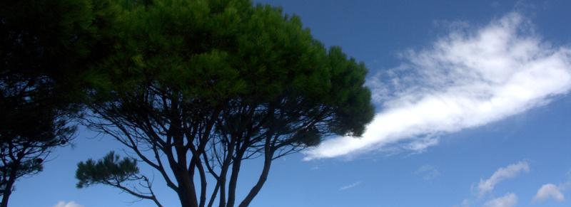 Meditreeanean