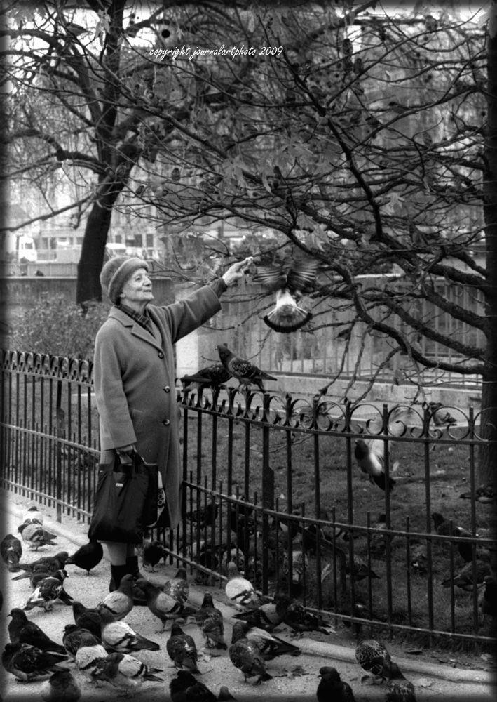 feeding the birds