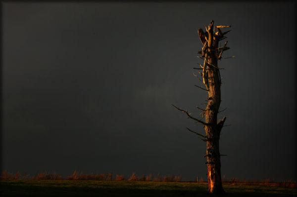 lightening tree,storm,sunlight