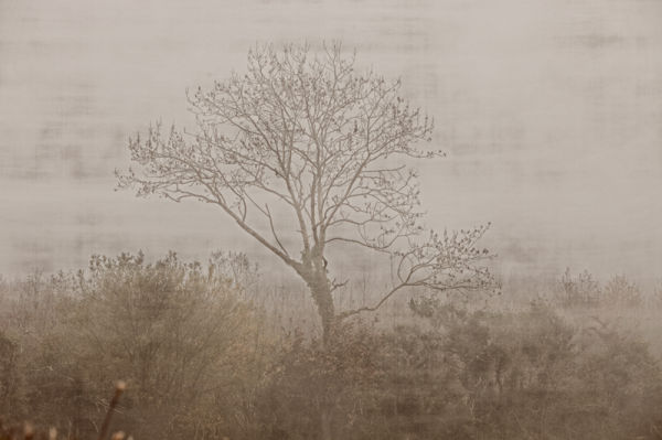 tree window winter cold misty fog bare