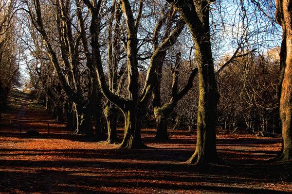 last autumn colours on row of trees