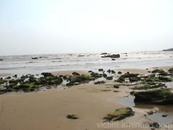ساحل هرمز