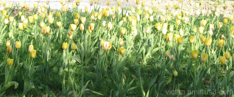 Spring   بهار