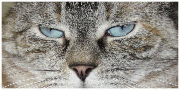 Our Cat-Bleu Eyes