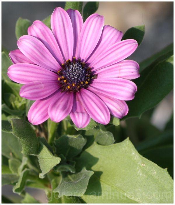 flower bloem