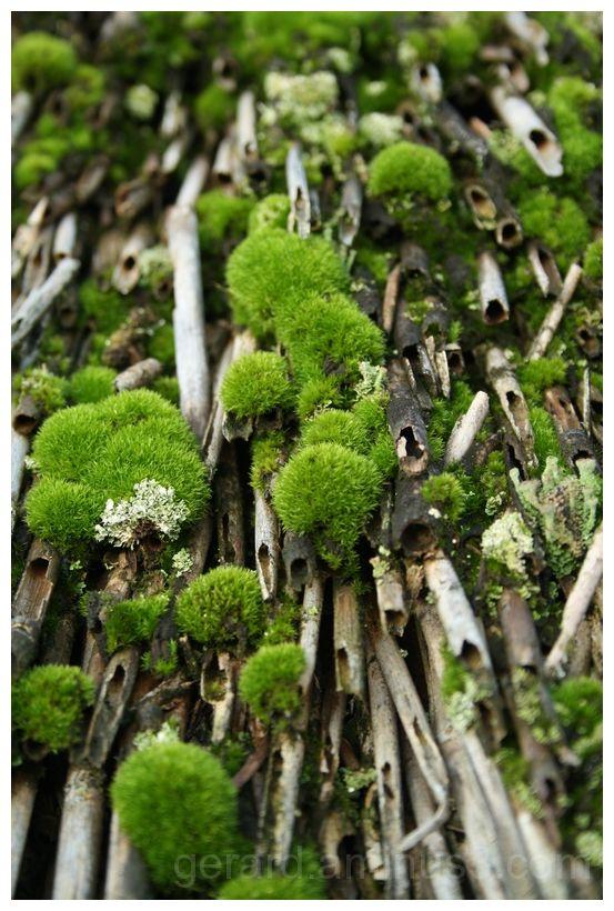 groene mos - green moss