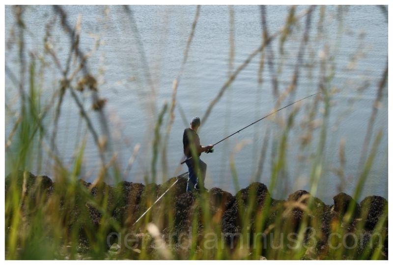 vissen fishing