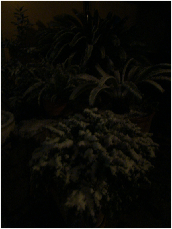 Neu Nocturna
