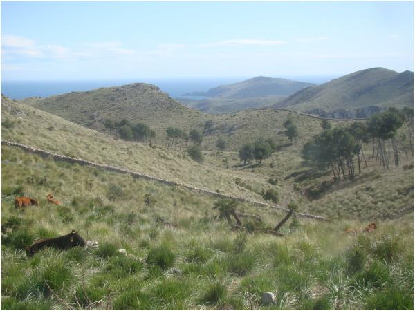 Península de Llevant (Illes Balears)