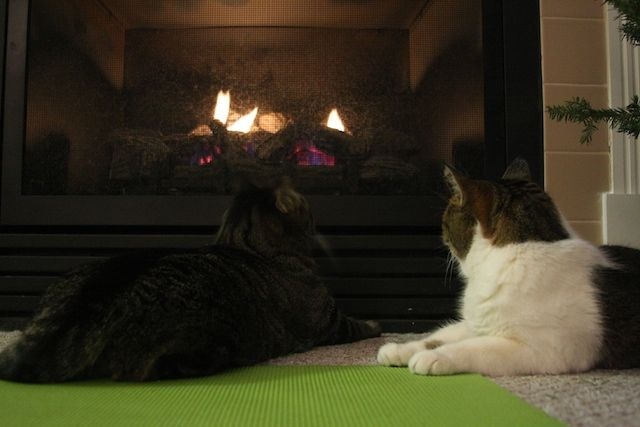 Cats by the fire (10/365)