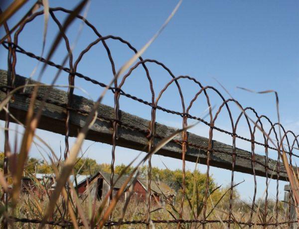 Old Yard Fence