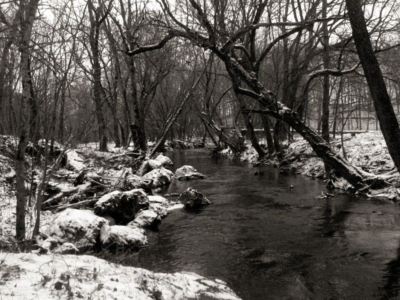 Forest Brook, Winter