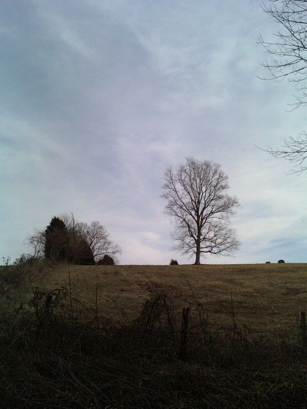 Rural Evening: Time's Sentinel