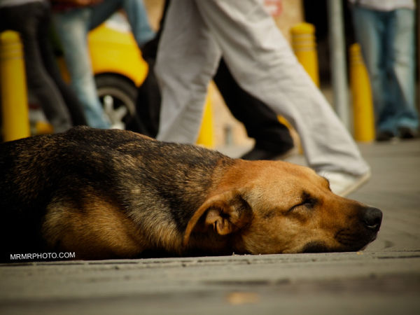 Dog in a crowded Square