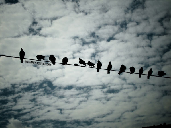 Bird in line