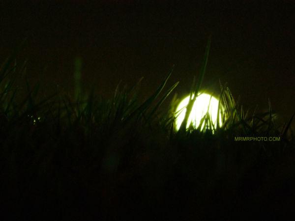 Lamp or Moon?