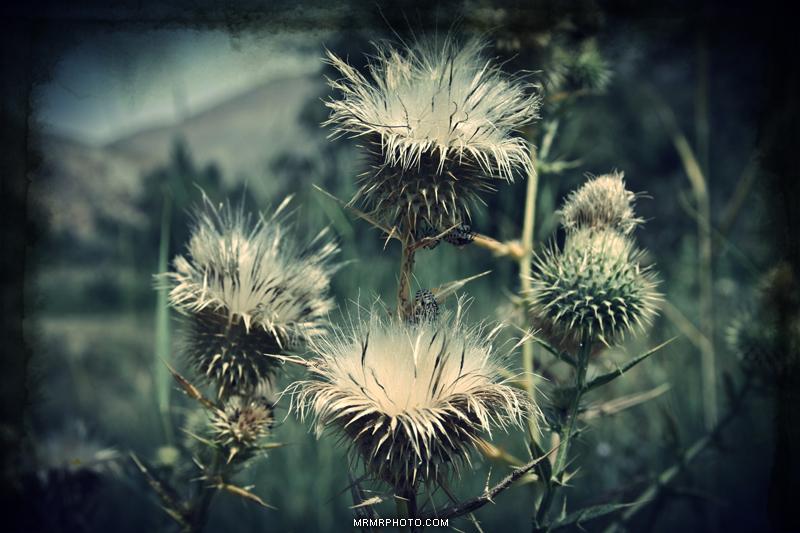 Flowers ***