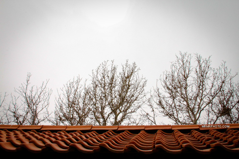 Roof & trees