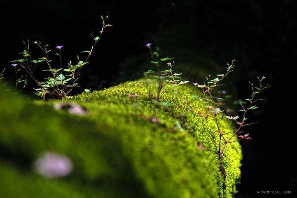 Moss and Tree