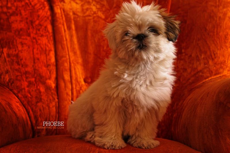 Phoebe | Dog