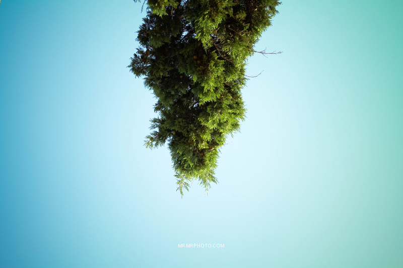 A tree and the sky