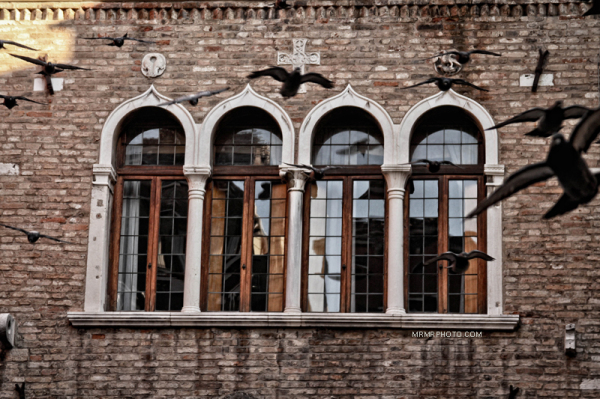 Window and pigeons in Venice