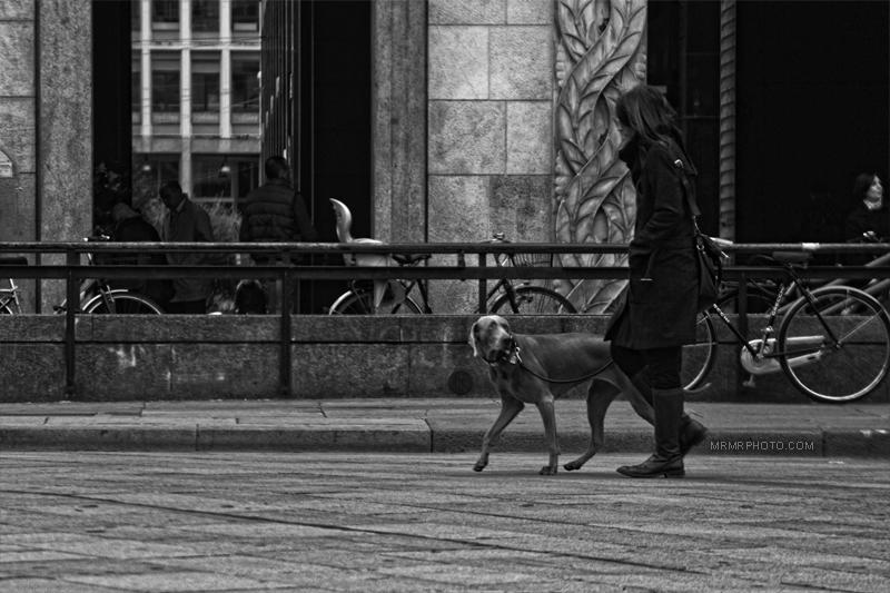 A dog in Duomo | Milan