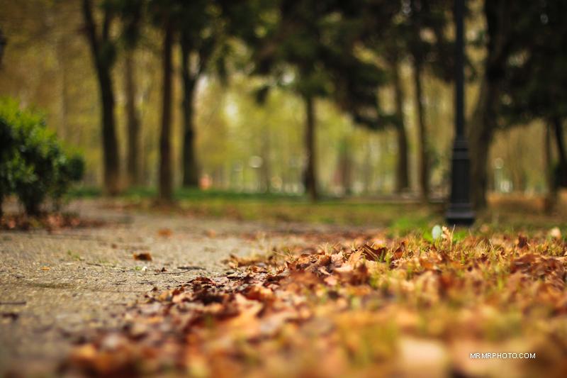 Leaves in Rasht