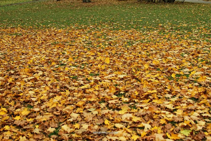 Leaves in Prague
