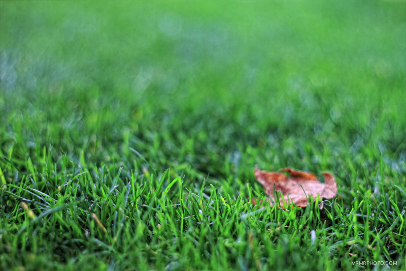 A leaf in green