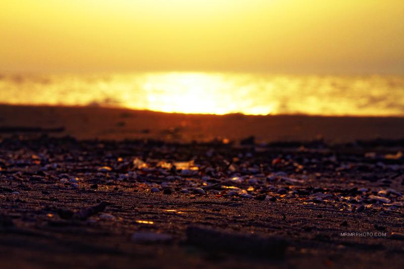 Seashells at sunset
