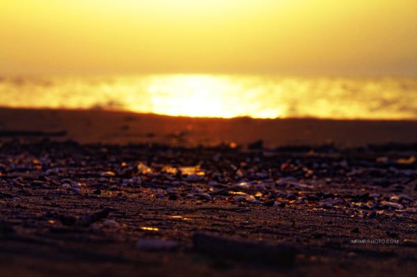 Seashells at sunset