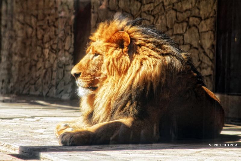 Tehran Zoo