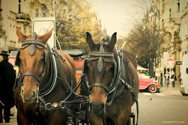 Carriage in Prage