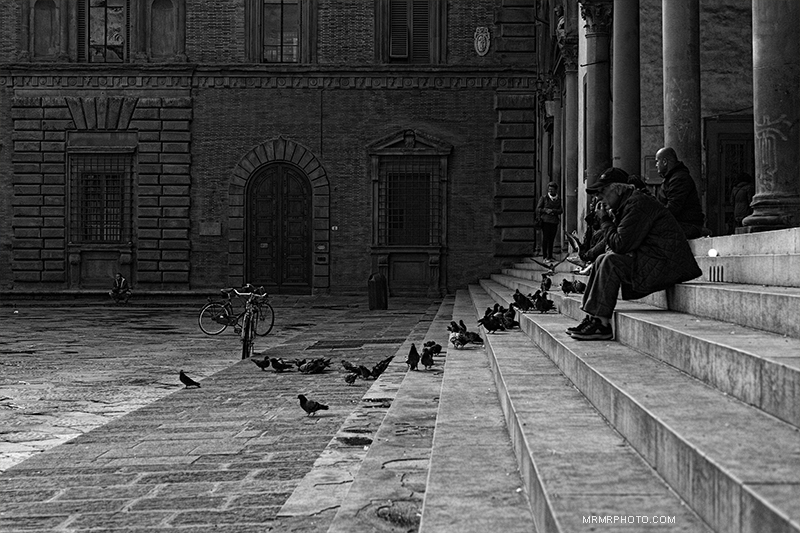 Pigeons in Florence