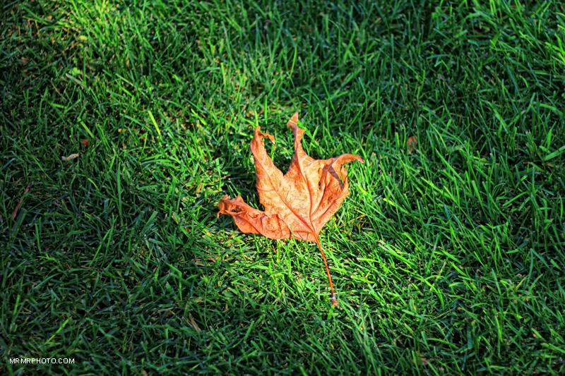 Alone leaf