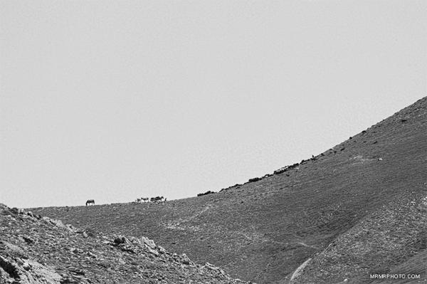 Laar desert