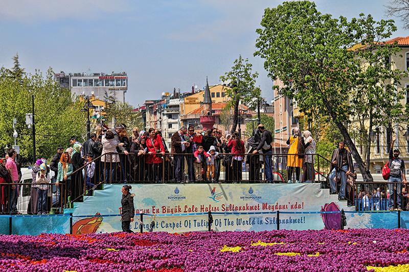 Tulipes in Istanbul