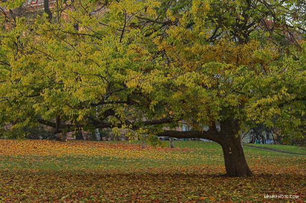 Tree - Prague