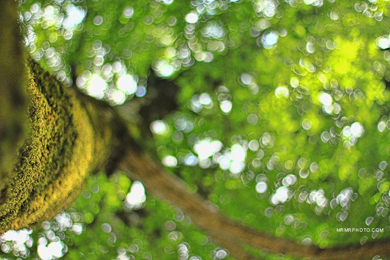 Tree bokeh