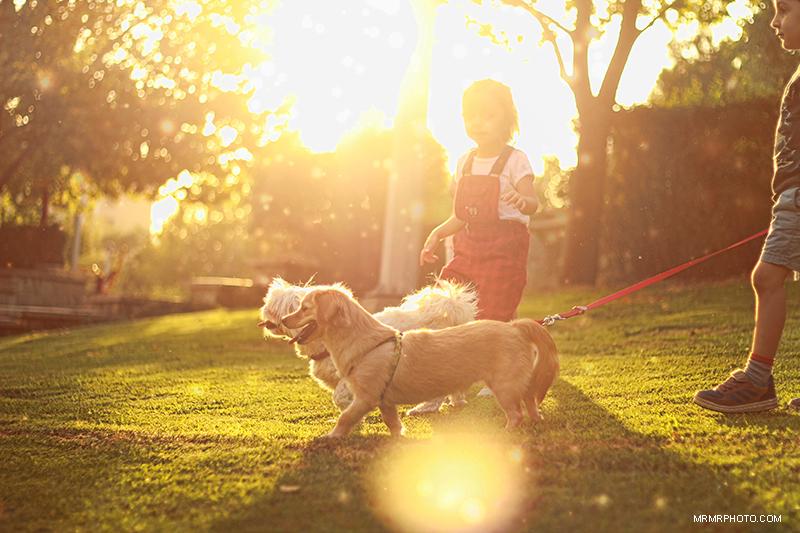 Dogs & Nika