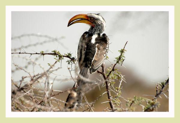 Bird ...