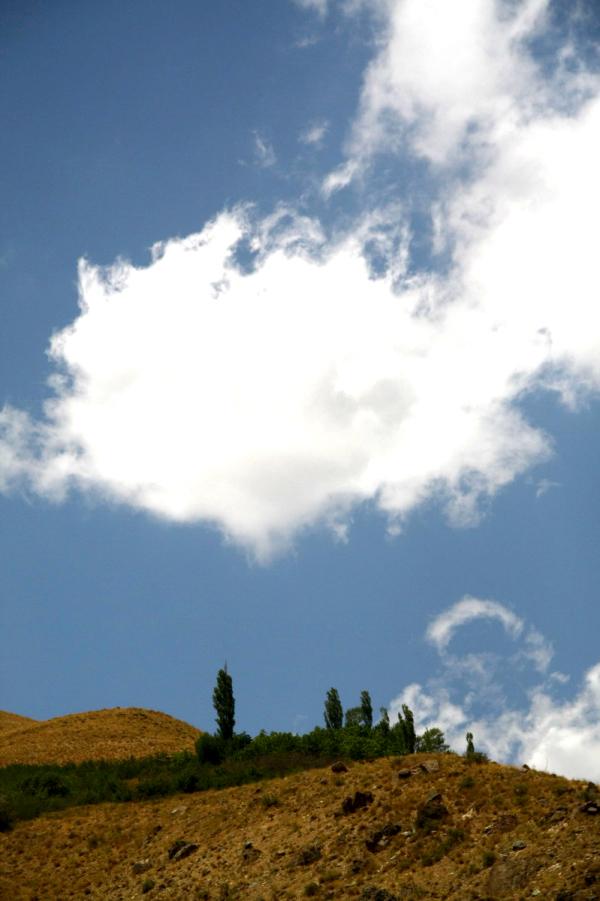 درخت،کوه،آسمان