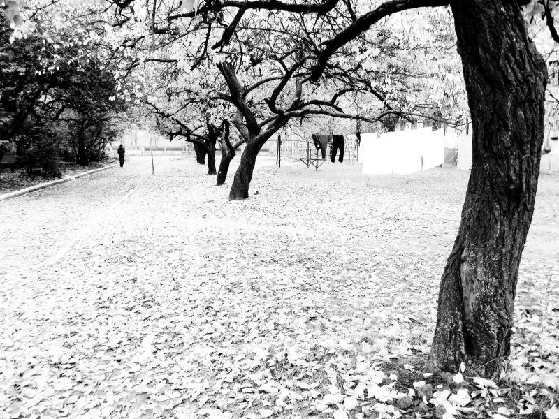 White Autumn Alley