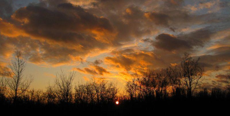 Orange Evening