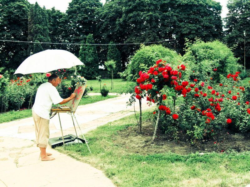 Painter & 1 million roses