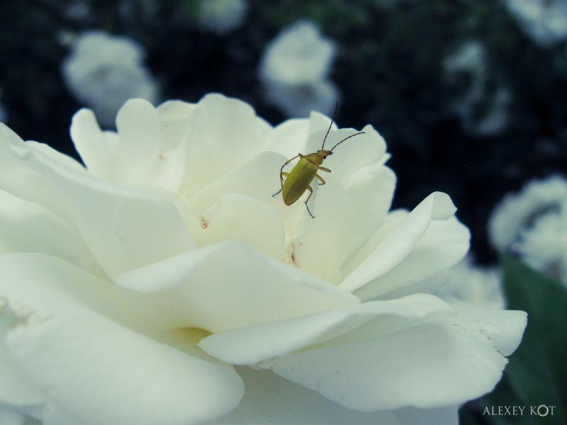 flower reconnaissance