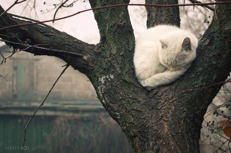 Cats + Trees = Sweet Dreams