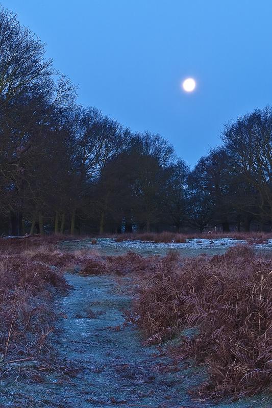 Richmond Park just before dawn